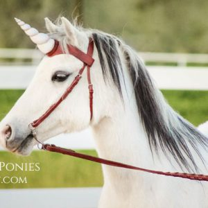 Unicorn Show Browband