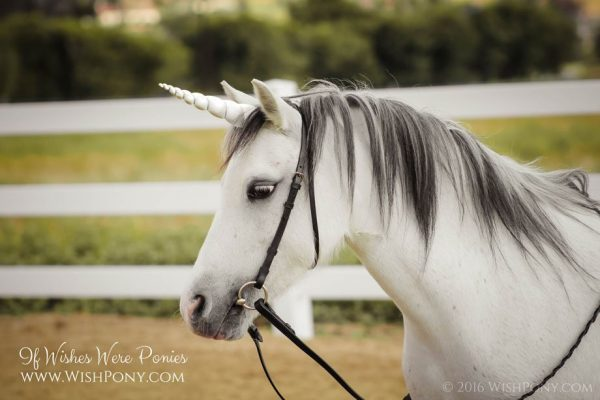 Paint Safe To Use On Horses