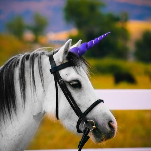Purple Unicorn Horn for Pony/Horse