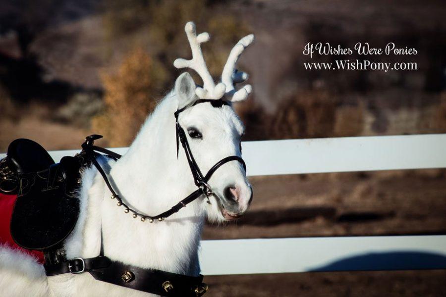 Reindeer Antlers for Horses Ponies