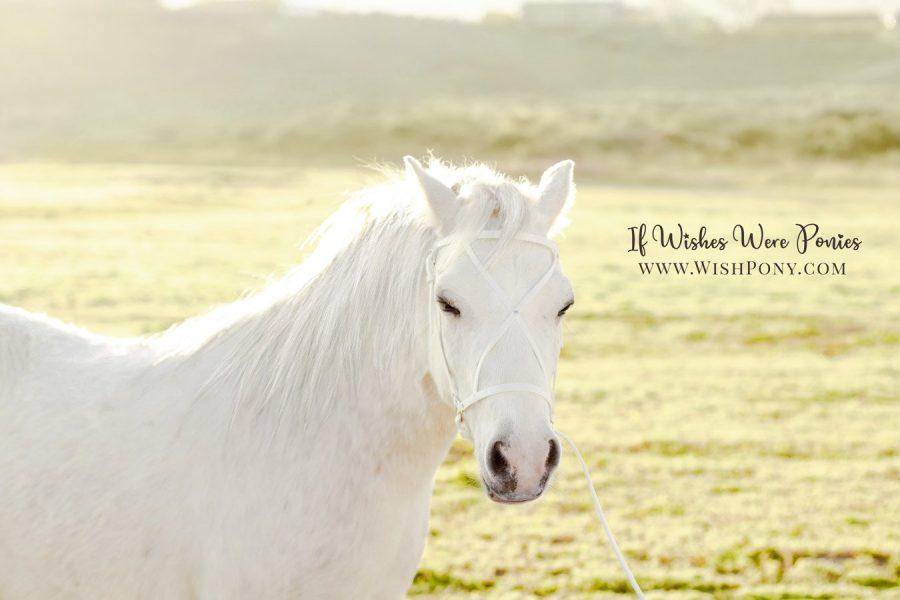 Wishpony.com White Show Halter