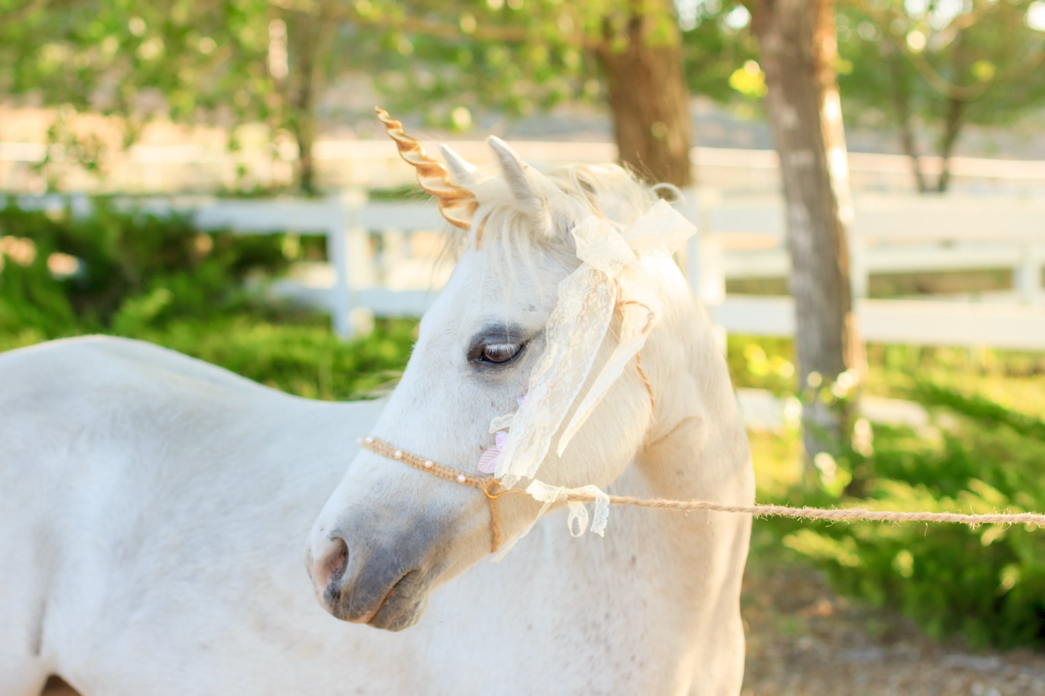 WishPony Gold Unicorn horns for horses and ponies
